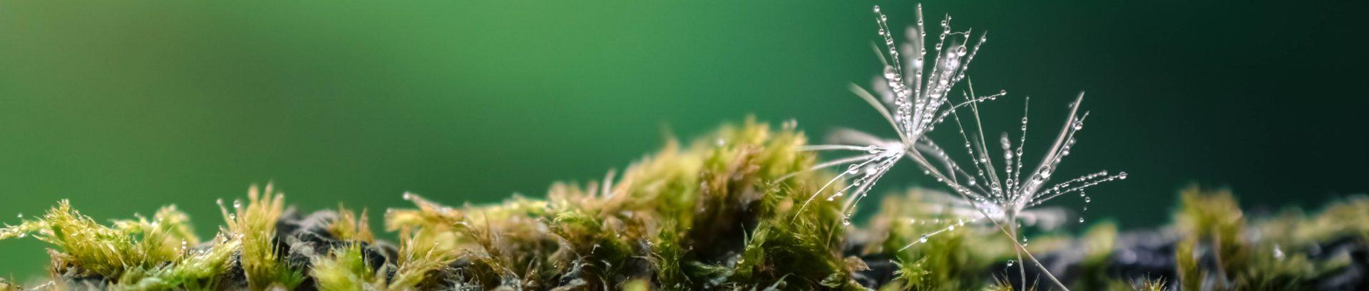 Biograz